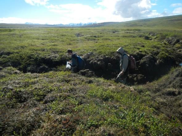 Arctic tundra thermokarst