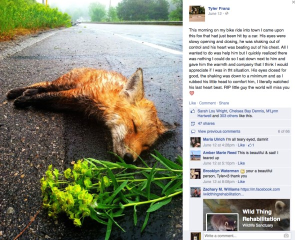 Tyler Franz dying fox photo goes viral Traverse City Michigan