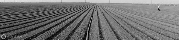 California drought Central Valley agriculture farm workers water supply