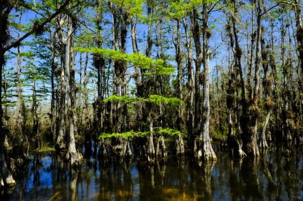 Everglades Florida Amendment 1 election 2014 water conservation
