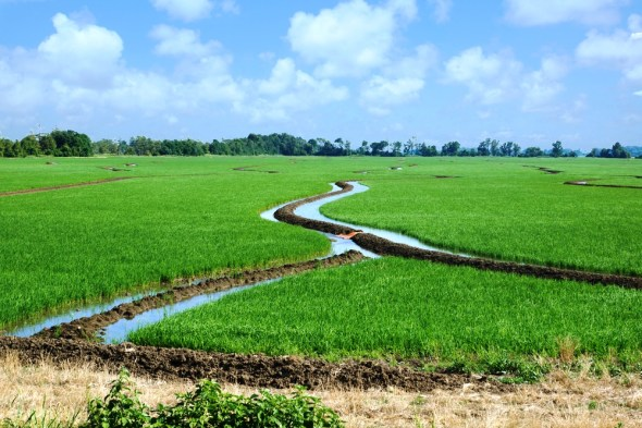 Arkansas 2014 state groundwater water plan irrigation rice farming