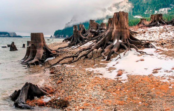 Washington Keechelus Lake reservoir Pacific Northwest snowpack tree stumps