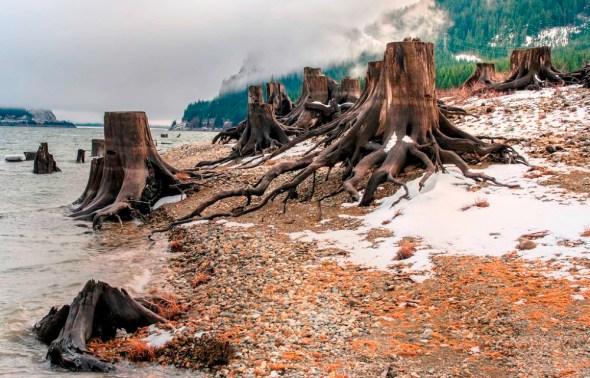 Washington Keechelus Lake reservoir Pacific Northwest snowpack tree stumps