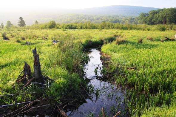 wetland Clean Water Rule EPA West Virginia Canaan Valley Little Blackwater River