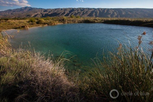 In one conservation effort nearCuatro Ciénegas, a pool was restored, leading to the recovery of riparian vegetation.Despite management oversight since the mid-1990s by Mexico's national parks agency and designation as an international biosphere reserve, Cuatro Ciénegas is steadily drying up.