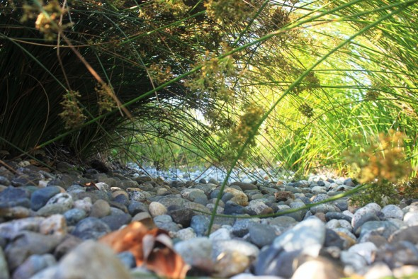 Seattle street swale Ballard neighborhood green infrastructure urban stormwater runoff management