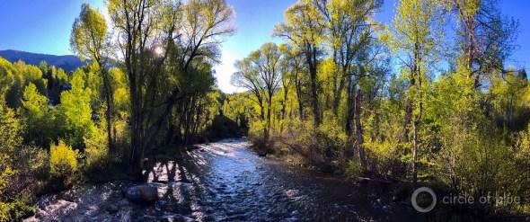 Roaring Fork River Colorado aspen stream spring Carl Ganter Circle of Blue