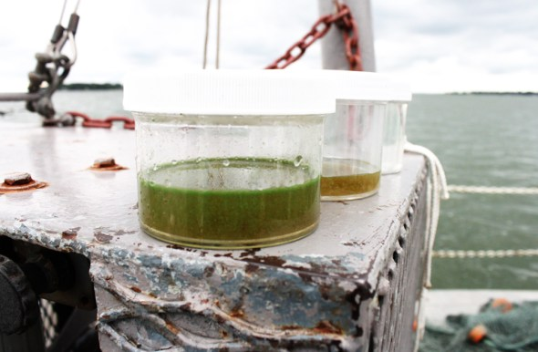 Lake Erie toxic algae bloom Toledo water