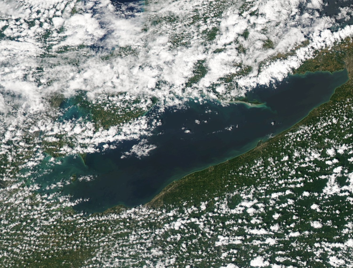 A satellite image captured on July 15, 2016 shows the beginning of an algal bloom. Forecasters predict this summer's bloom will be much smaller than the record-setting bloom last year.  Image courtesy MODIS / NOAA CoastWatch