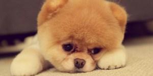Circle of Hope, philadelphia, dog resting on ground looking grumpy