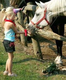 birthdayhorse