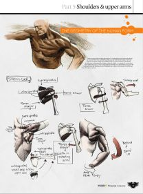 GFX-ImagineFX.Presents.Anatomy.How.to.draw.and.paint.Anatomy.2010_Page_041