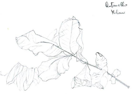 disegno-di-puro-contorno8