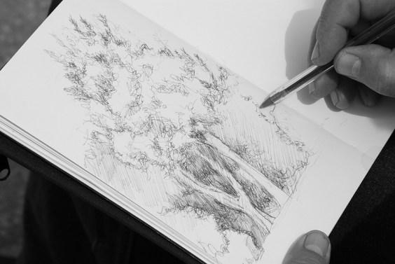 studio dal vero di albero - penna Bic nera
