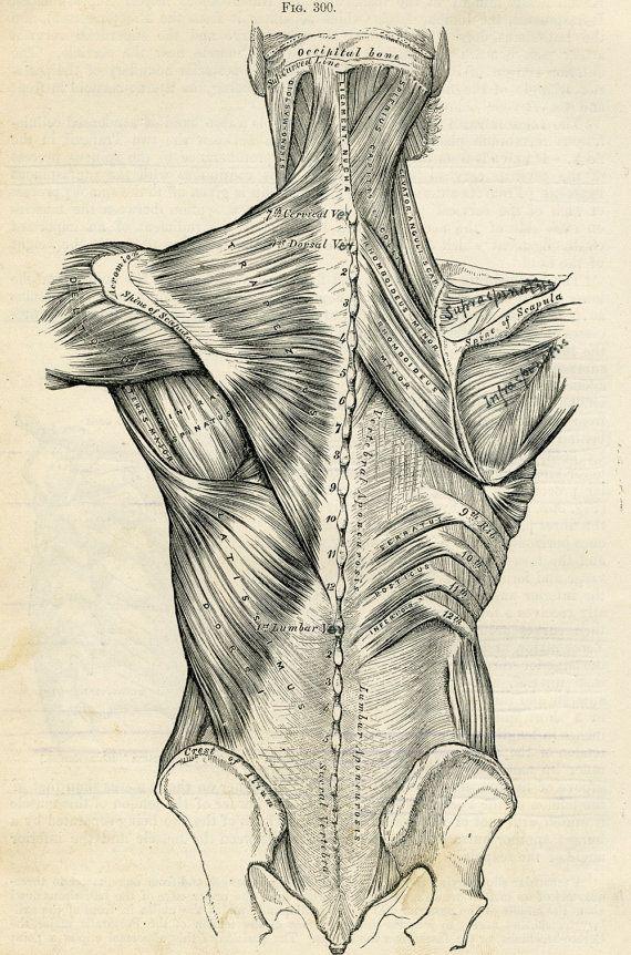 anatomia della schiena