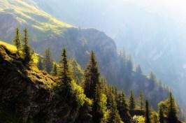 paesaggio alberi prospettiva