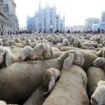 Pura idiozia la politica italiana