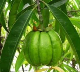 photo of the fruit