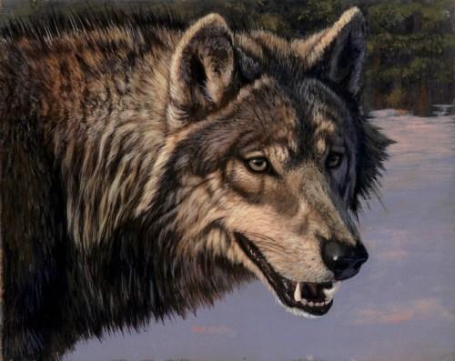 Wolf head study wbsz
