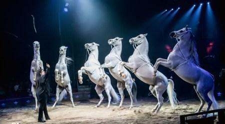 Horses at liberty - Circus Dictionnary