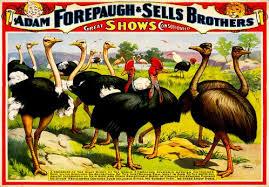 Ostrichs - Circus Dictionnary