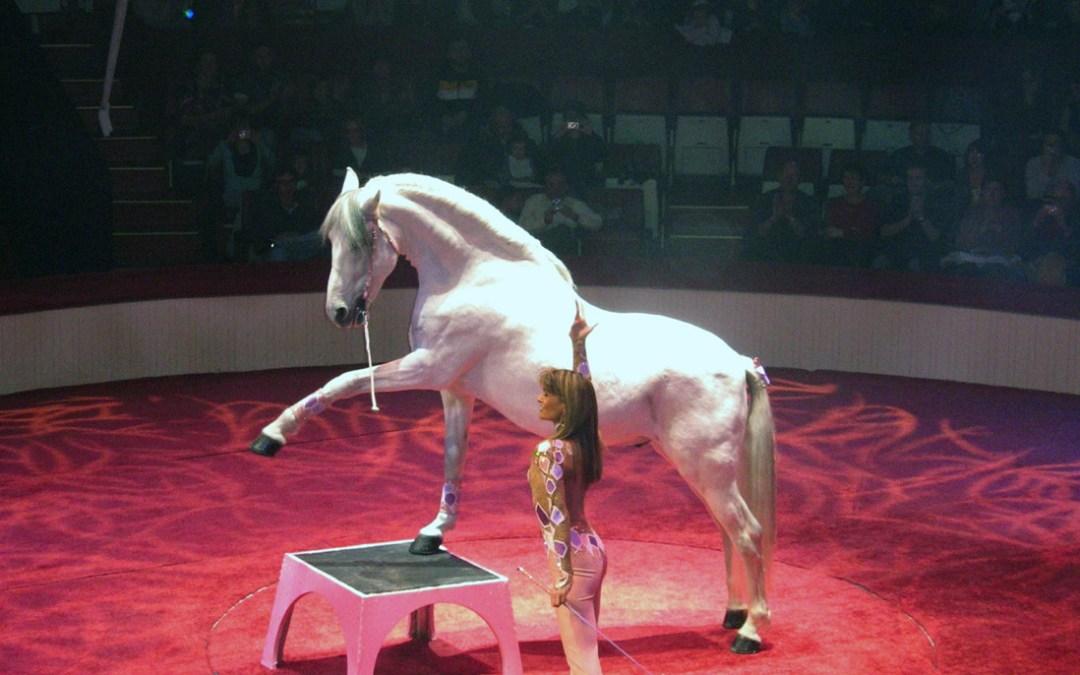 Le Cheval au Cirque
