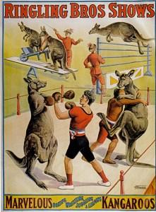 Kangaroo boxing - Circus Dictionary