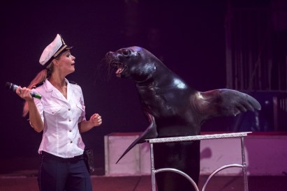 A sea lion : Philip - Circus Dictionary