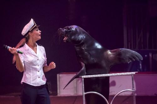 A sea lion : Philip - Circus Dictionary
