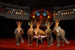 Kornilov et ses éléphants en 2015 - Eléphants