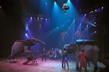 René Junior Casselly - éléphants