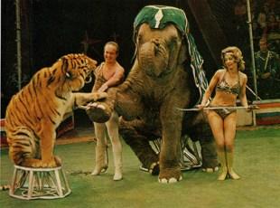 Dolores et Mstislav Zapachny - Eléphants