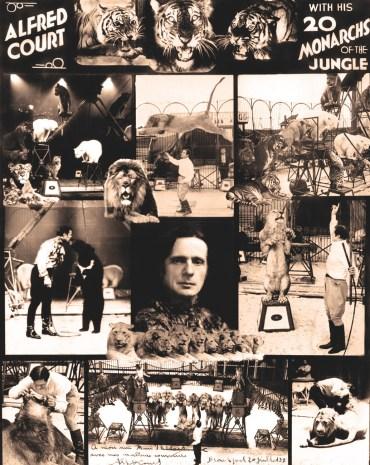 Montage par Alfred Court - Paix dans la Jungle