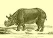 Jacques Tourniaire - rhinocéros