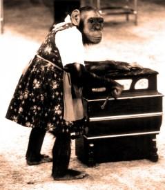 La chimpanzé Miss Capellini
