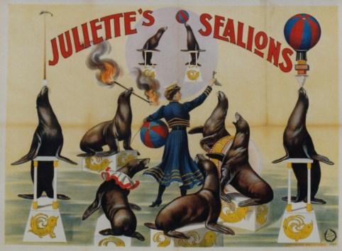 Juliette et ses lions de mer - Medrano