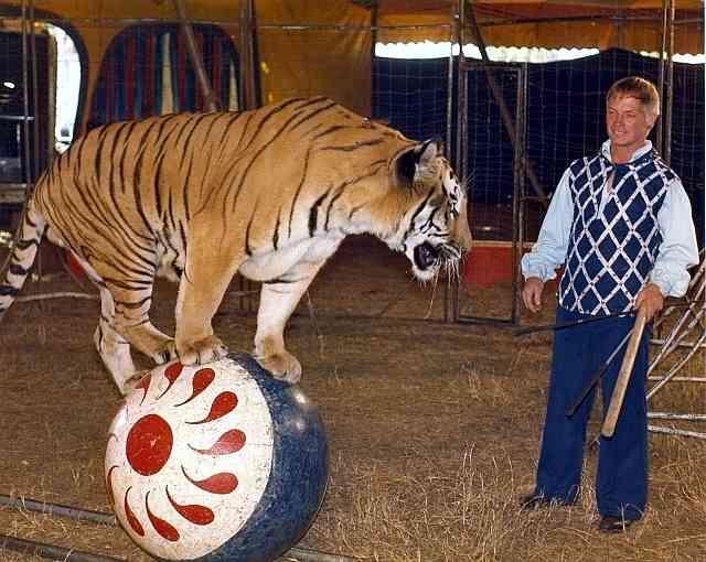 Wayne Killed Tiger Ringmaster