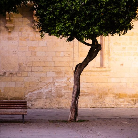 Lonesome, tree,bench, Valletta
