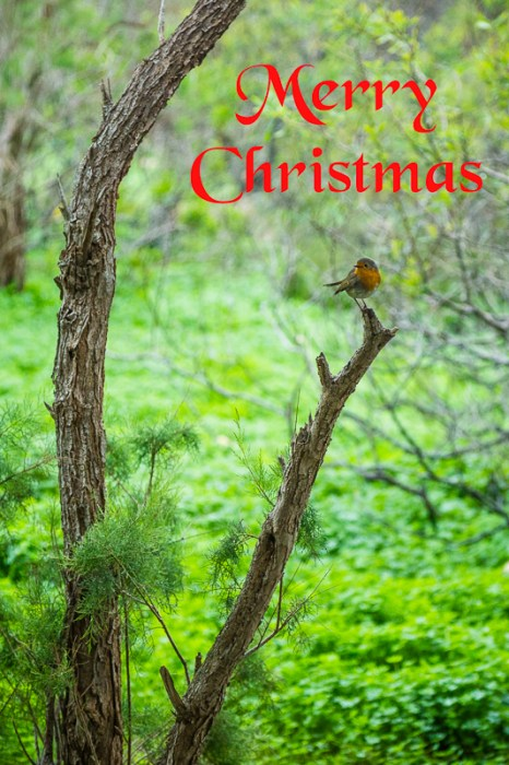 Merry Christmas, Robin, Country Side