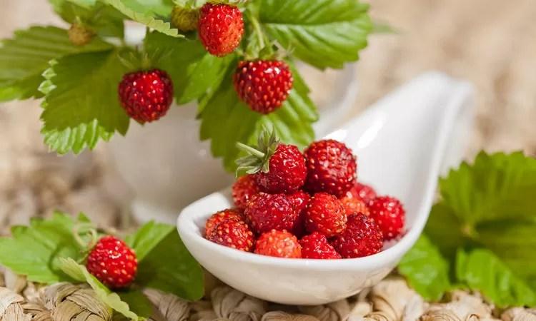 frutti di bosco, fragolina di bosco