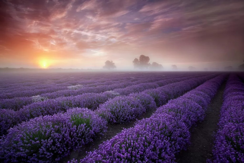 Pianeta Terra - Lavender Sunrise © Antony Spencer