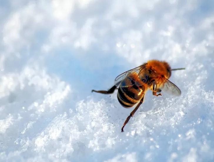 le api d'inverno
