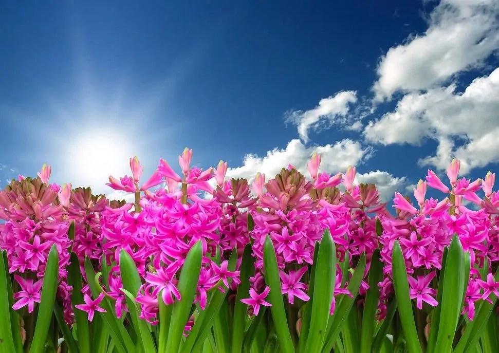primavera frasi