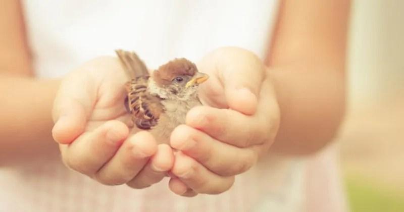 la gentilezza è una livella