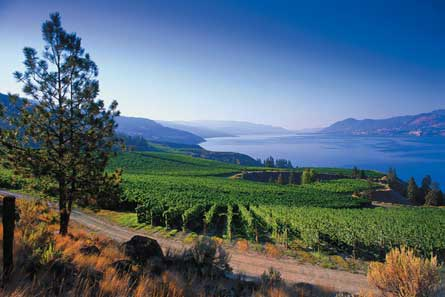 Kelowna Wine Country