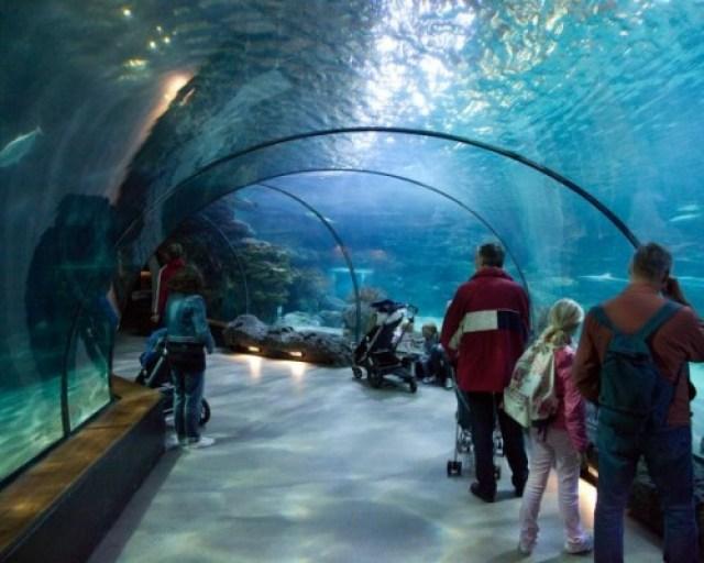 аквариумът в Берген
