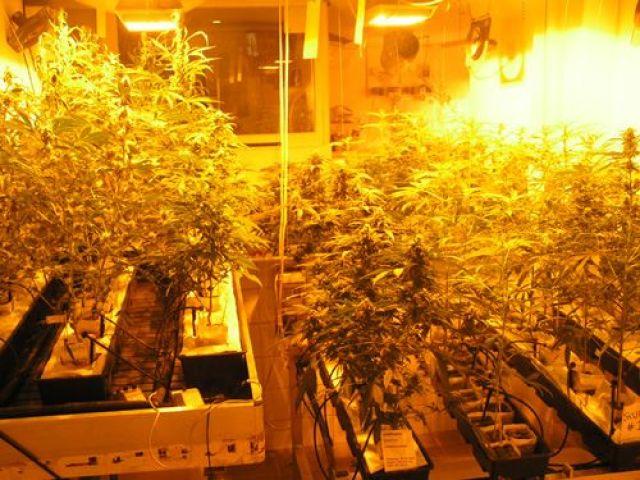 Музей на хашиша, марихуаната и конопа