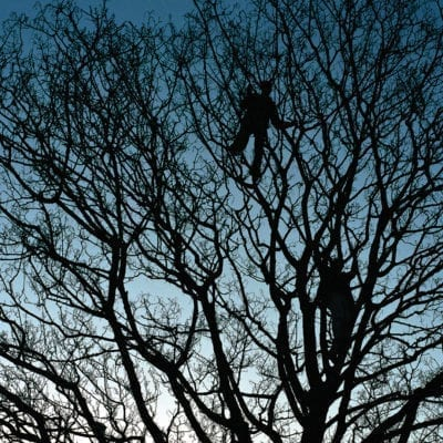 Tree Men, From London at Dawn by Anthony Epes