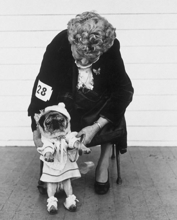 Pug dog contest ©Arlene Gottfried