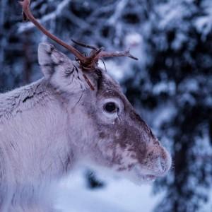 finland_nathan_lemon_Unsplash_forweb